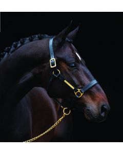 Horseware Amigo Padded Leather Headcollar Black